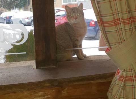 26-01-19 Per la fame i gatti a Timisoara vengono a mangiare al ristorante
